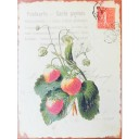 Nostalgic Metal Signs - Vintage multilingual Postcard with Strawberries