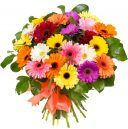 Rainbow Gem Gerber Daisy Fresh Flower Bouquet